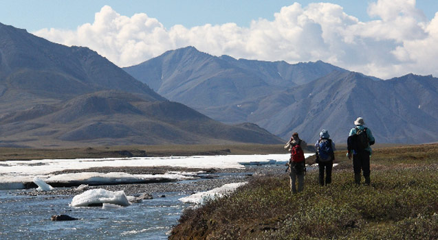 Birding along the Aichilik River on a day hike from camp in the Arctic National Wildlife Refuge. Photo Carol Comeau.