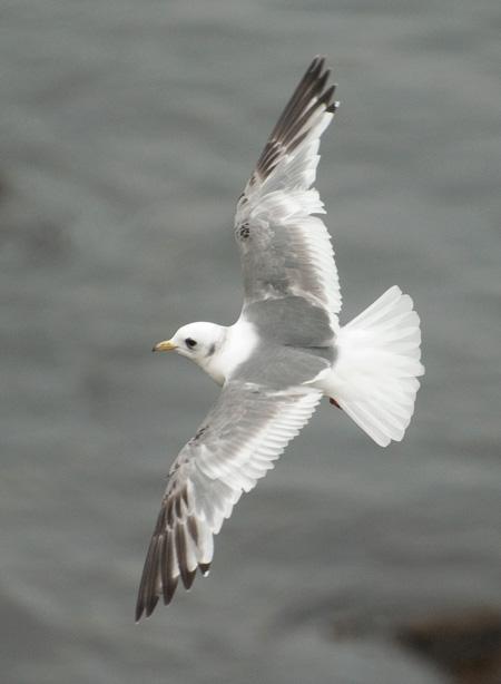 Black american gulls nude — photo 12