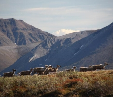 Arctic National Wildlife Refuge Base Camp